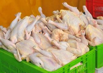 مردم مرغهای درشت مصرف نکنند