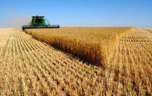 رشد ۲۰ درصدی قیمت برنج و ۷۶ درصدی گاو زنده در پاییز ۹۷