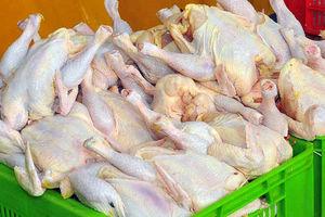 در آستانه ماه مبارک رمضان «مرغ» گران شد