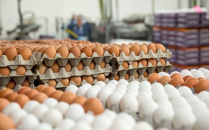 تورم بهاری تخممرغ بیش از ۵۶ درصد شد