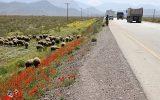 افزایش ۱۲.۳ درصدی تردد در جادههای کشور