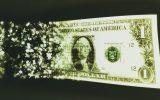 بی میلی روس ها به دلار