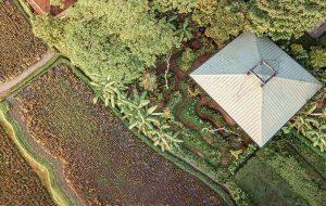 خانه درختی چوبی C در باغ های زیبای بالی (+عکس)
