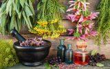رونق صنعت گیاهان دارویی با تلاش ۸۰۰ شرکت/ارائه ۴۸ خدمت به شرکتهای خلاق
